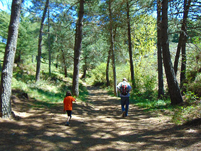 Father and son on an outdoor walk in Pine woods. Whether you're going for a walk, camping or mountain climbing, make the best of the outdoors.